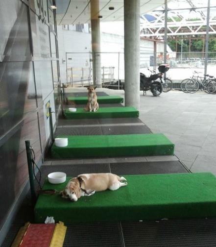 ikea-dogs