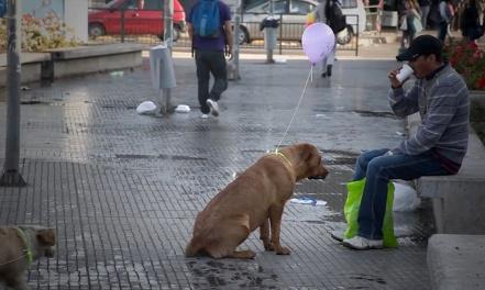 EstoyAquí_cachorroderua-balao